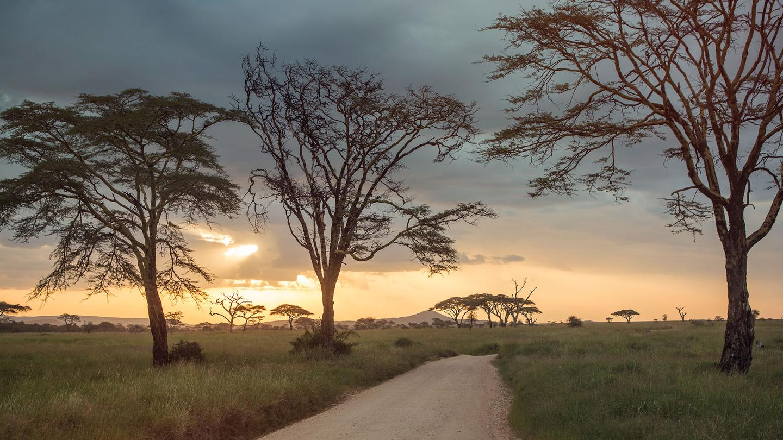 Kenya Tanzanya Turu Kenya Tanzanya Safari Turu Safari