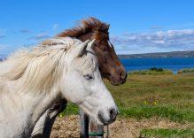 İzlanda Turu Anıları