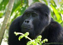 10 Soruda: Uganda Turları